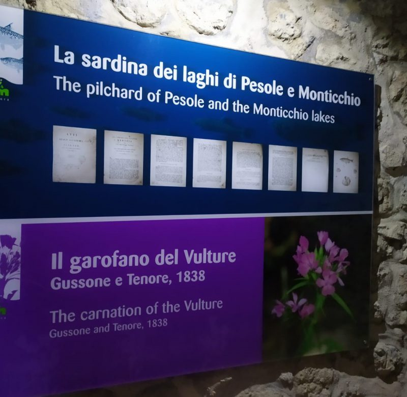 museo vulture lake best