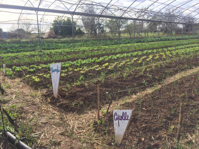 Adotta l'orto, progetto Luna laboratorio rurale