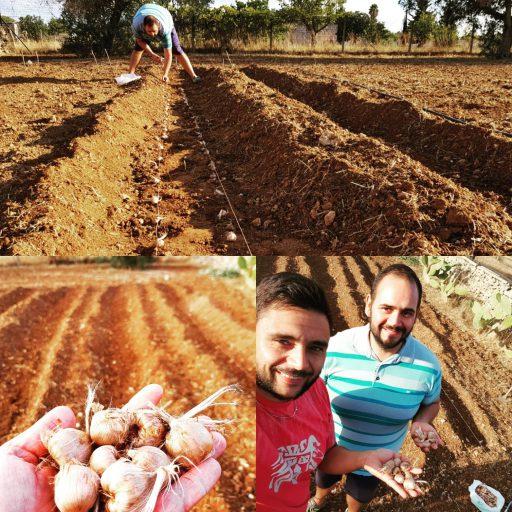 Coltivatori di zafferano