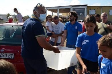 Tartaruga caretta caretta liberata dal gruppo di volontari di Pantelleria nella prima settimana del mese di Settembre 2020